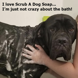 Scrub A Dog Soap Botanical Bliss All Natural Products